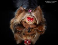 http://data20.gallery.ru/albums/gallery/120136-41979-57626828-200-u24083.jpg