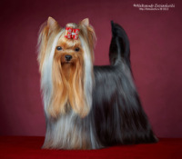 http://data20.gallery.ru/albums/gallery/120136-ac8d2-57087308-200-ufc62d.jpg